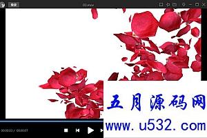 玫瑰花瓣转场视频素材