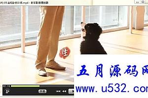 宠物狗训练教程【全16讲】